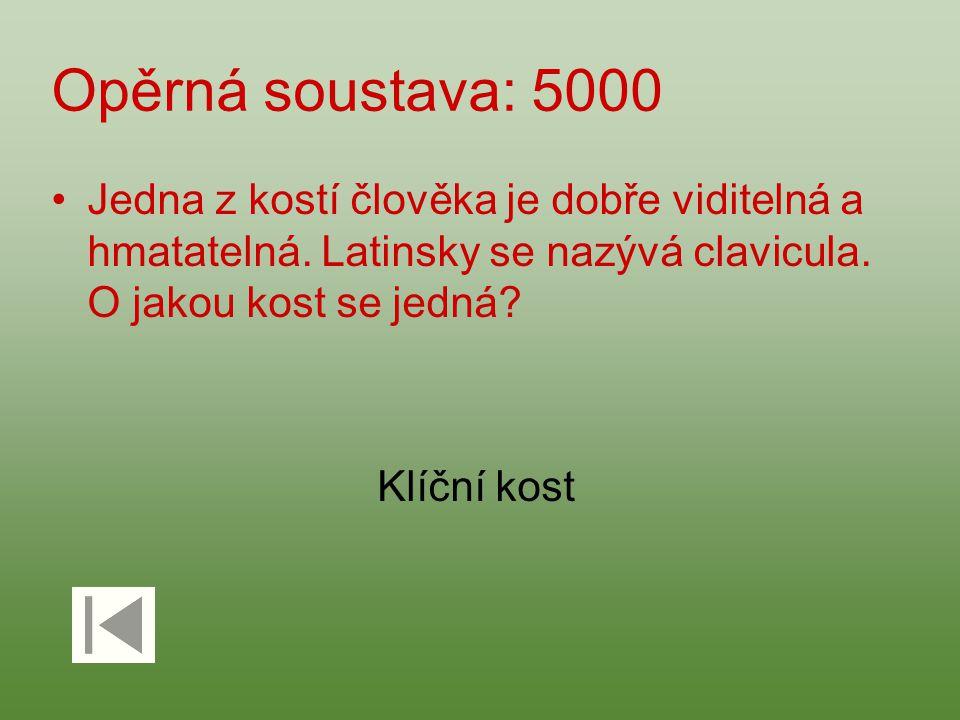 Opěrná soustava: 5000 Jedna z kostí člověka je dobře viditelná a hmatatelná. Latinsky se nazývá clavicula. O jakou kost se jedná