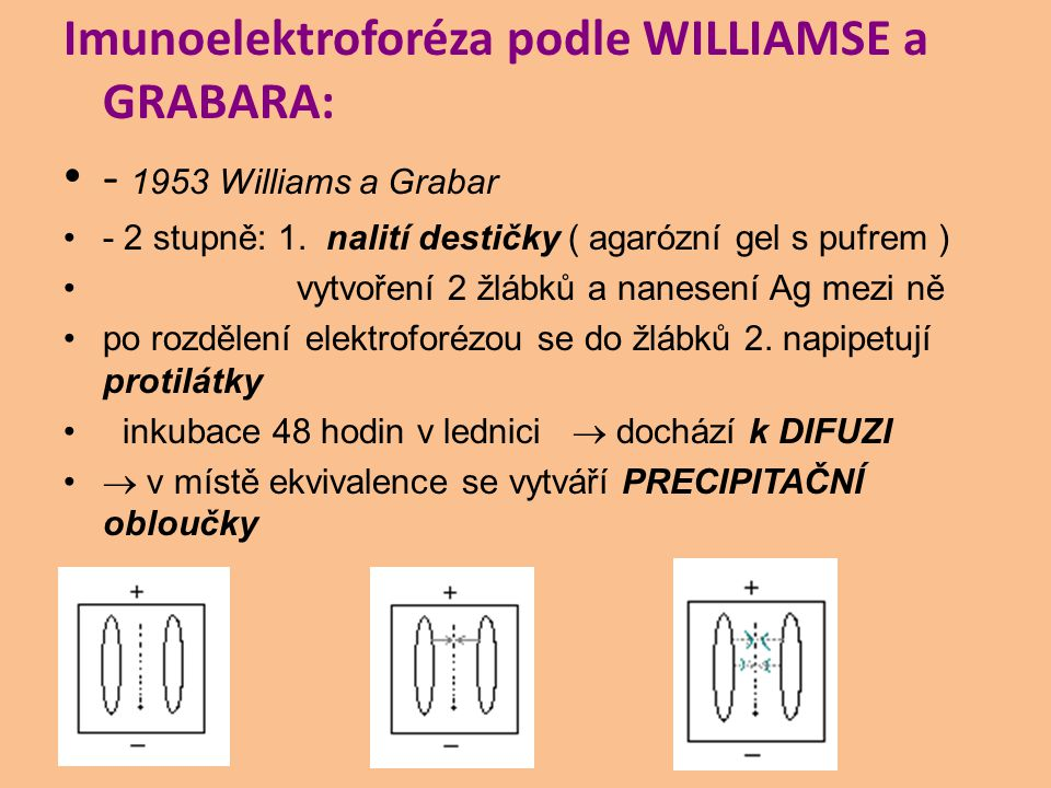 Imunoelektroforéza podle WILLIAMSE a GRABARA: - 1953 Williams a Grabar