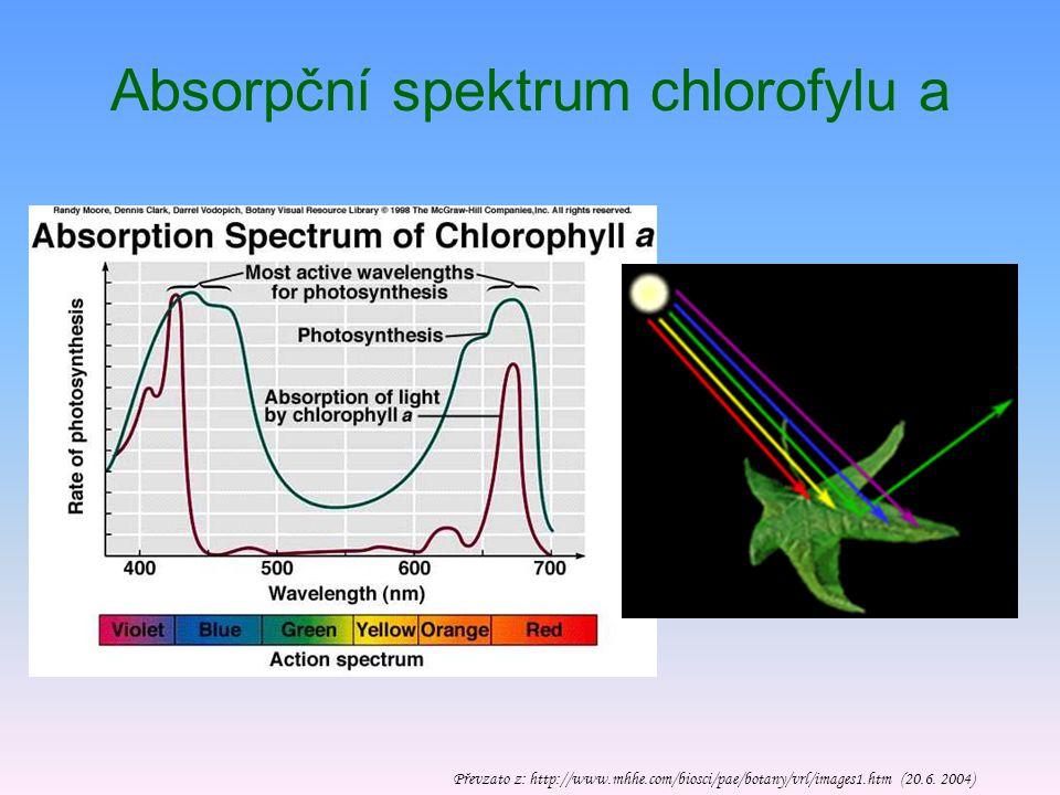 Absorpční spektrum chlorofylu a