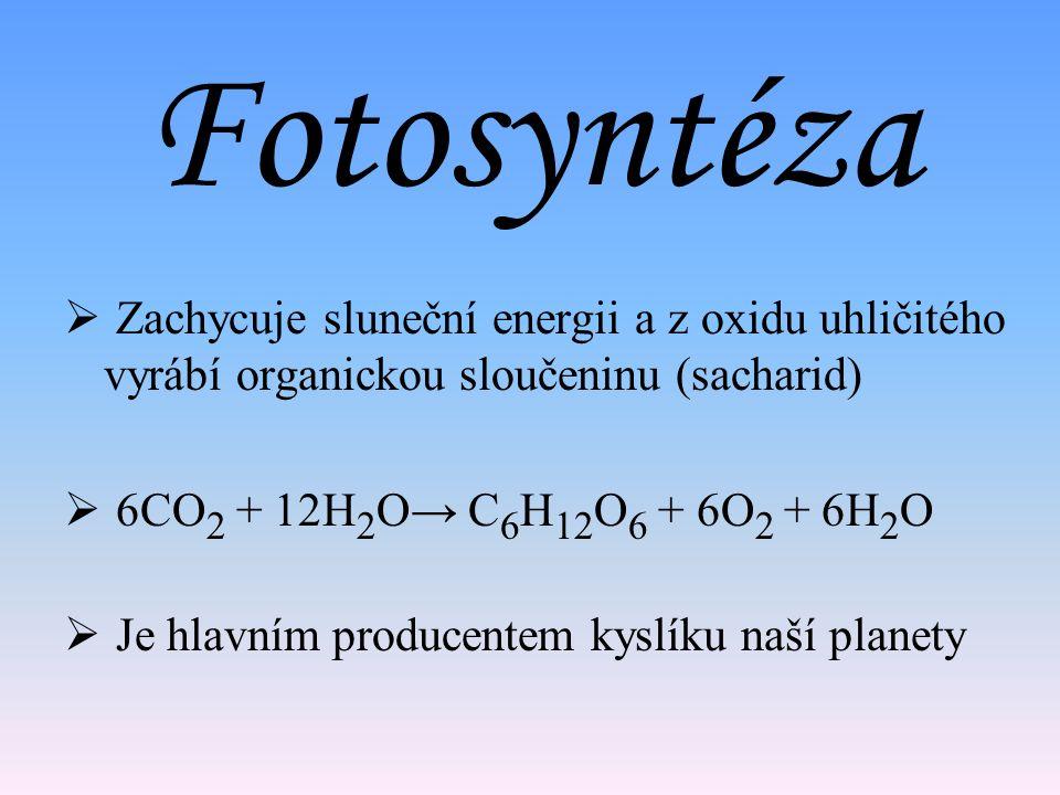 Fotosyntéza Zachycuje sluneční energii a z oxidu uhličitého vyrábí organickou sloučeninu (sacharid)