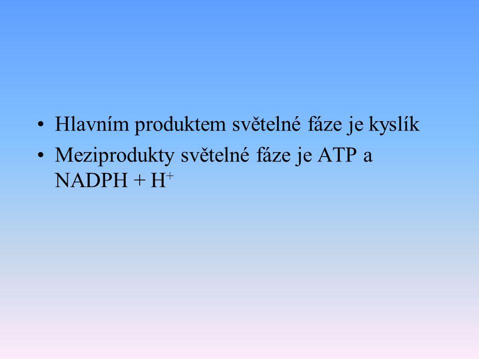 Hlavním produktem světelné fáze je kyslík