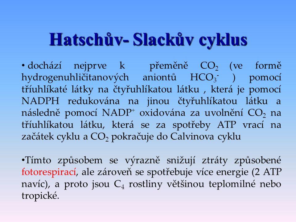 Hatschův- Slackův cyklus