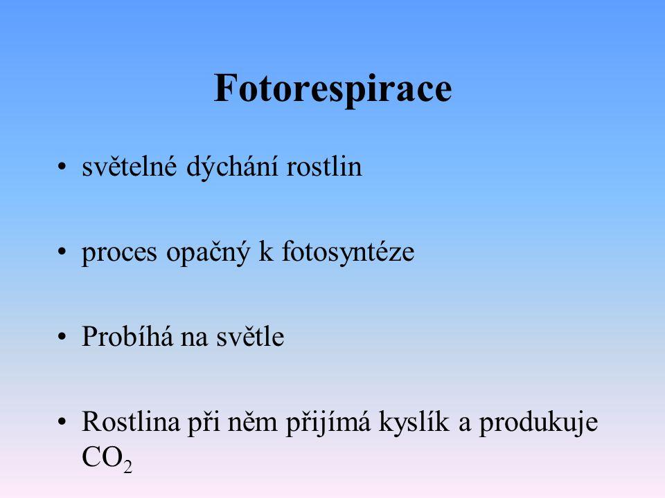 Fotorespirace světelné dýchání rostlin proces opačný k fotosyntéze