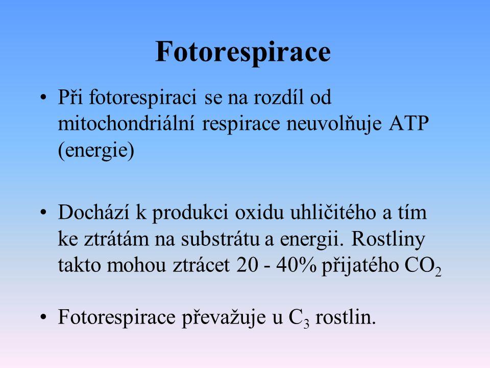 Fotorespirace Při fotorespiraci se na rozdíl od mitochondriální respirace neuvolňuje ATP (energie)