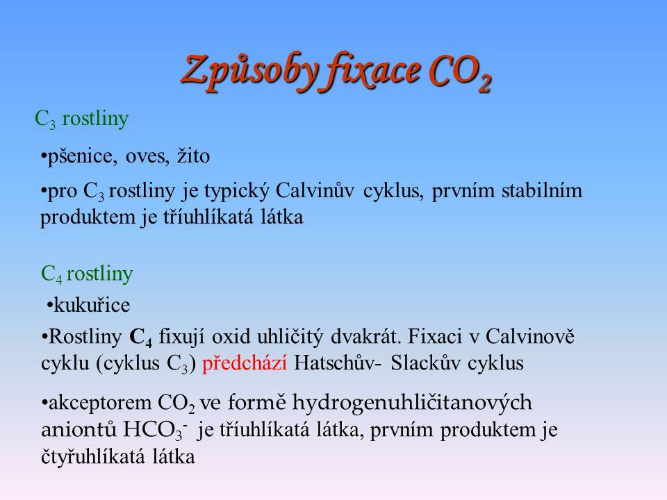 Způsoby fixace CO2 C3 rostliny pšenice, oves, žito