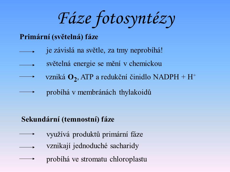 Fáze fotosyntézy Primární (světelná) fáze