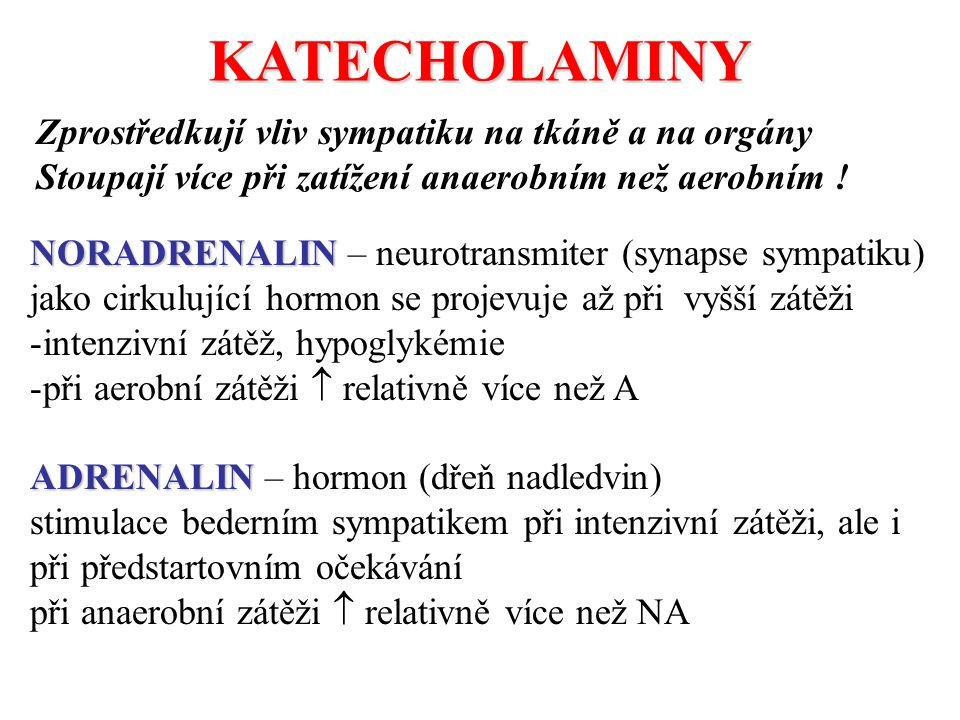 KATECHOLAMINY Zprostředkují vliv sympatiku na tkáně a na orgány