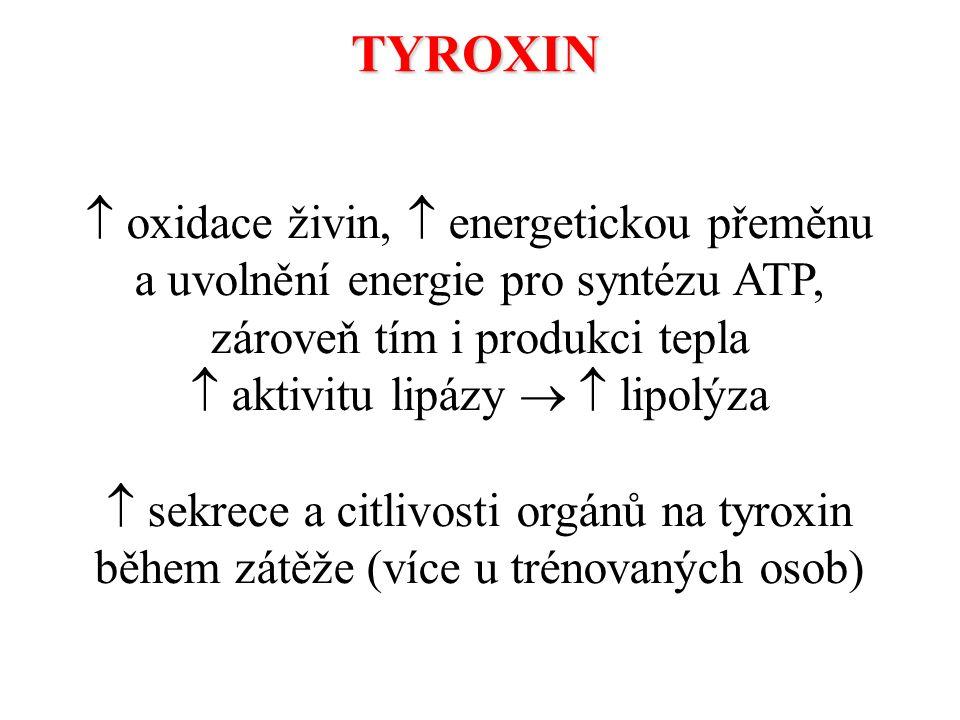  aktivitu lipázy   lipolýza