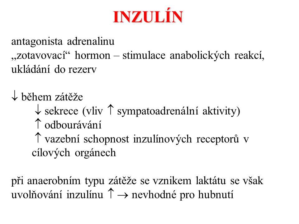 INZULÍN antagonista adrenalinu