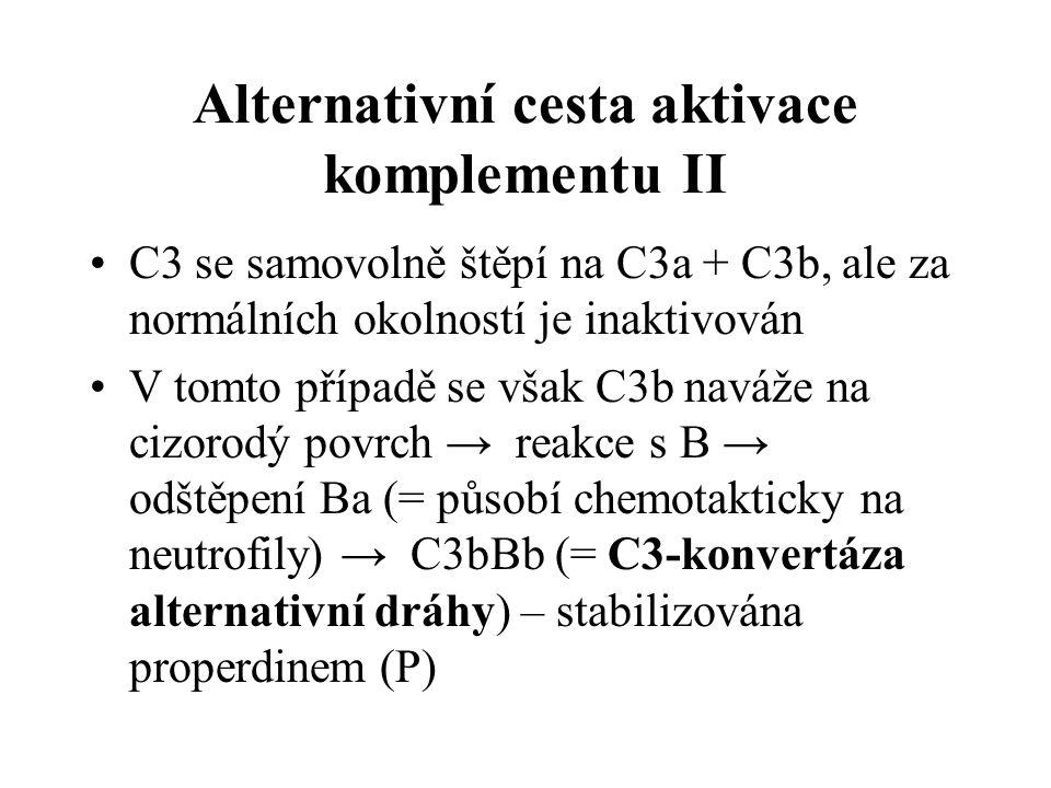 Alternativní cesta aktivace komplementu II