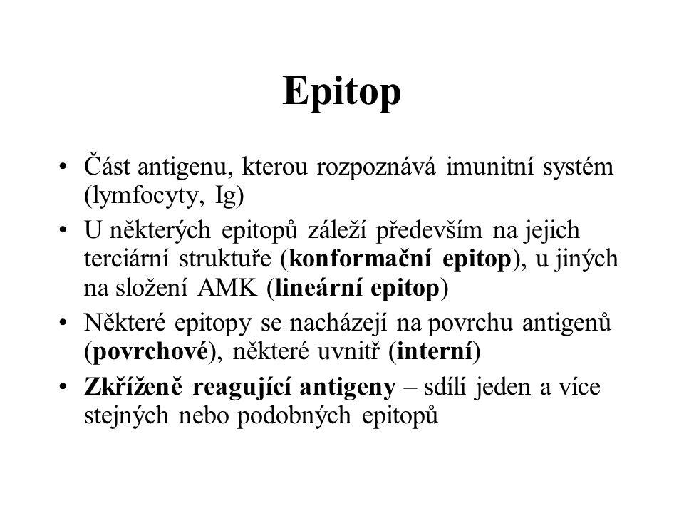 Epitop Část antigenu, kterou rozpoznává imunitní systém (lymfocyty, Ig)