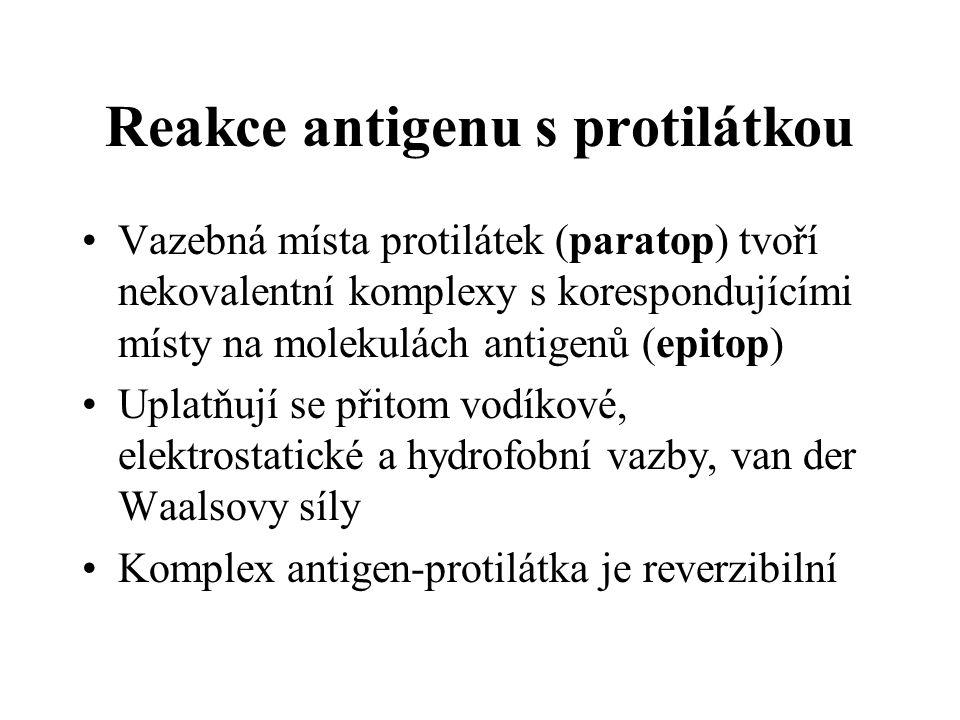 Reakce antigenu s protilátkou