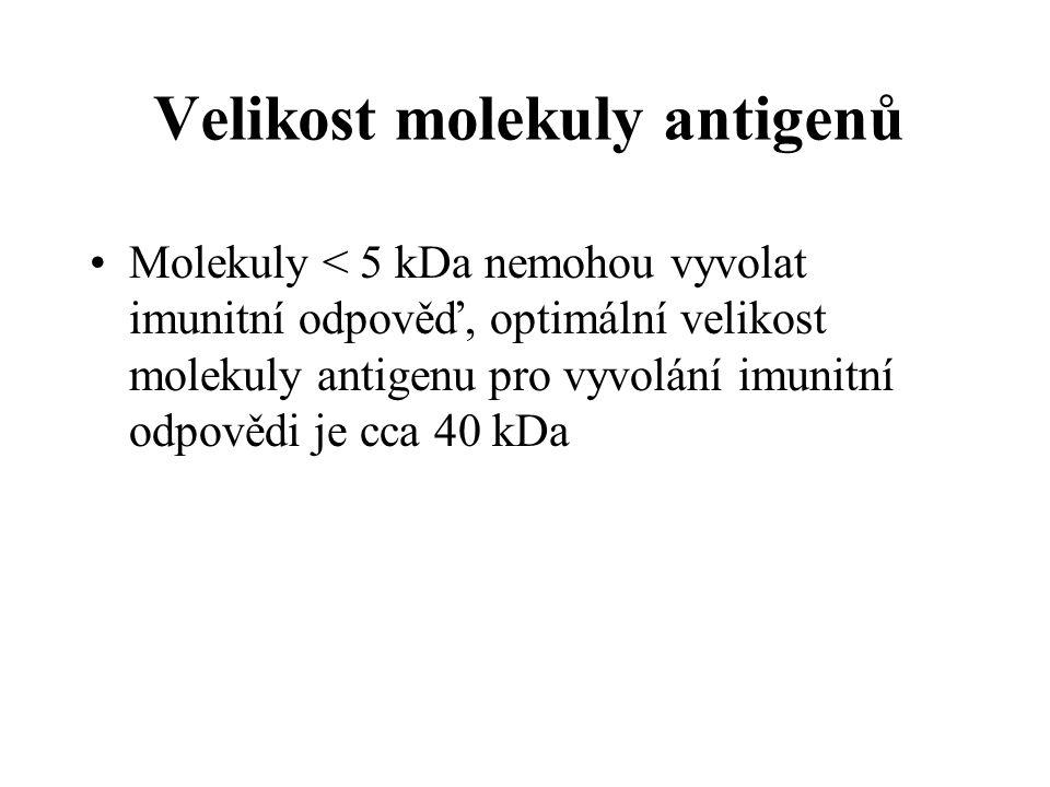 Velikost molekuly antigenů