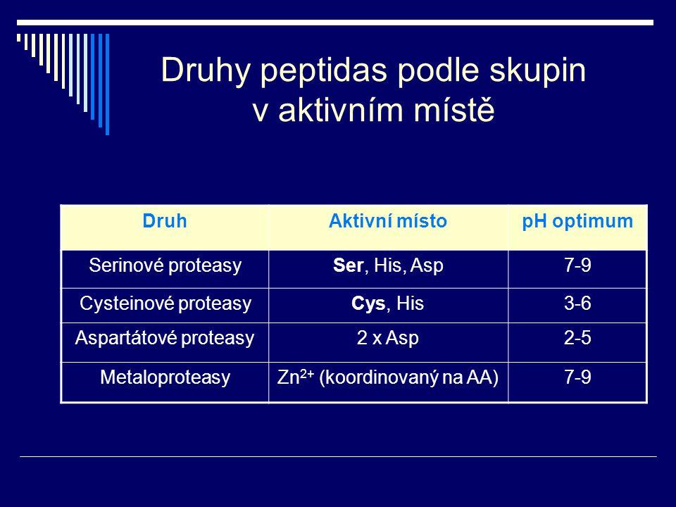 Druhy peptidas podle skupin v aktivním místě