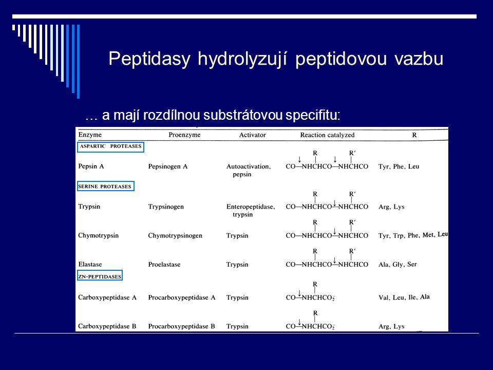 Peptidasy hydrolyzují peptidovou vazbu