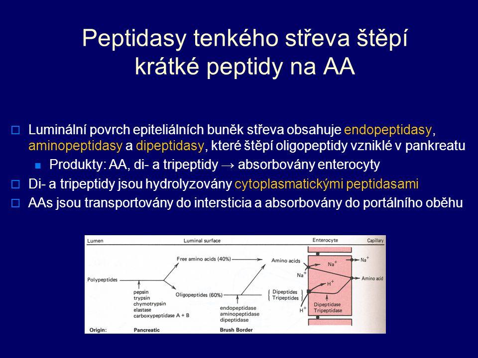 Peptidasy tenkého střeva štěpí krátké peptidy na AA