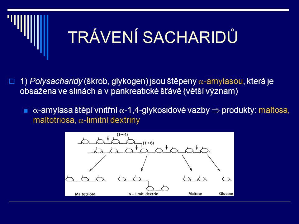TRÁVENÍ SACHARIDŮ 1) Polysacharidy (škrob, glykogen) jsou štěpeny -amylasou, která je obsažena ve slinách a v pankreatické šťávě (větší význam)