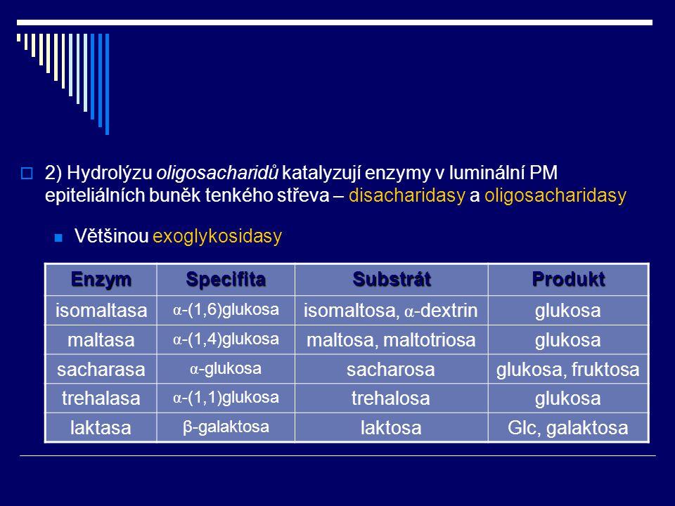Enzym Specifita Substrát Produkt