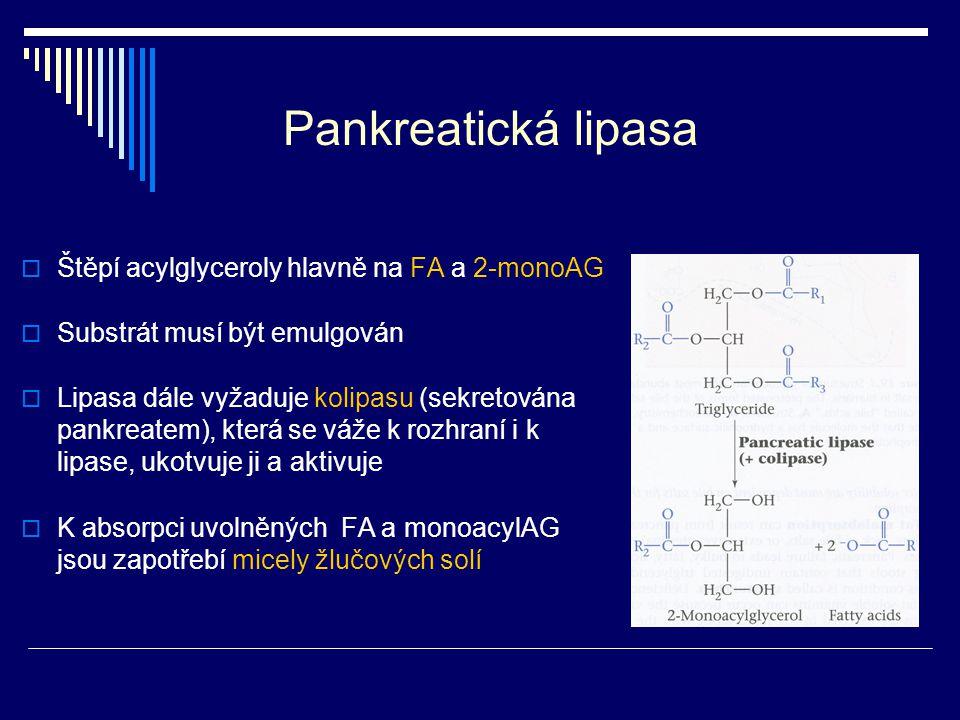 Pankreatická lipasa Štěpí acylglyceroly hlavně na FA a 2-monoAG