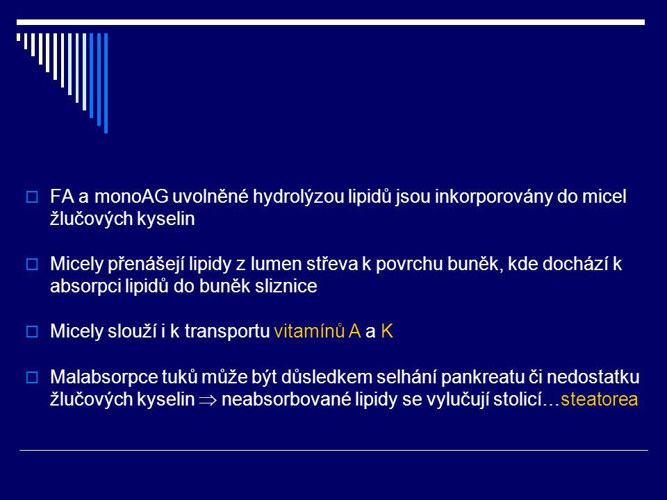 FA a monoAG uvolněné hydrolýzou lipidů jsou inkorporovány do micel žlučových kyselin