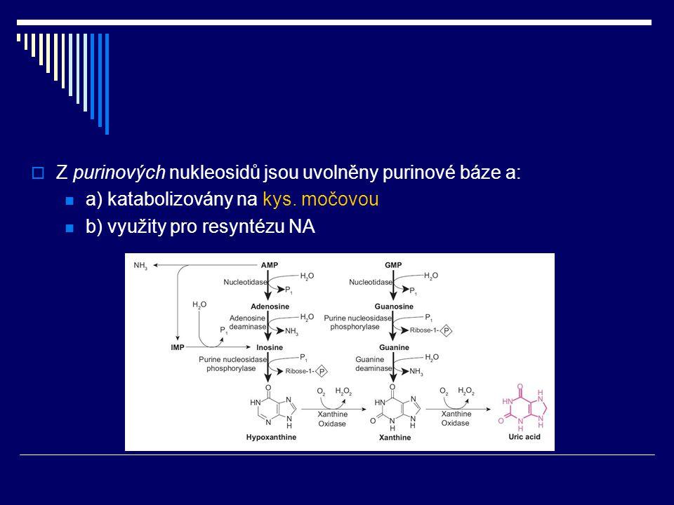Z purinových nukleosidů jsou uvolněny purinové báze a:
