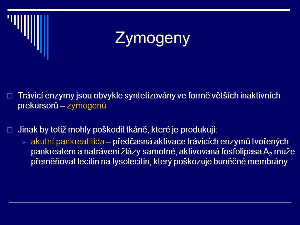 Zymogeny Trávicí enzymy jsou obvykle syntetizovány ve formě větších inaktivních prekursorů – zymogenů.