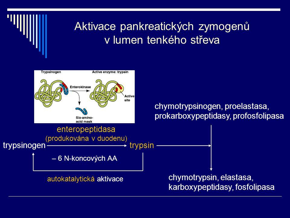 Aktivace pankreatických zymogenů v lumen tenkého střeva