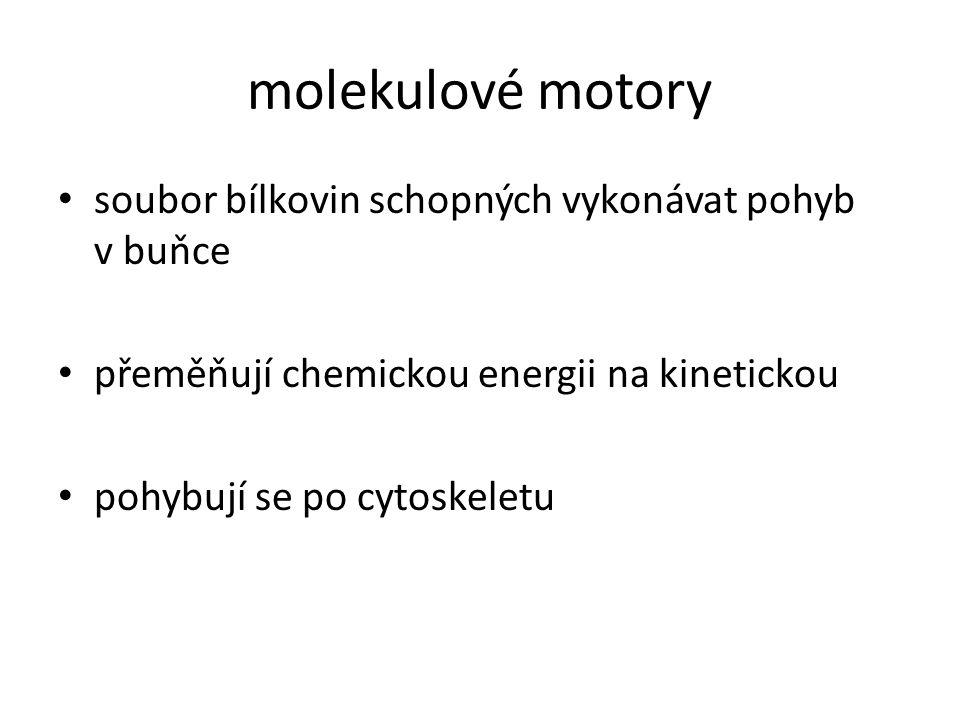 molekulové motory soubor bílkovin schopných vykonávat pohyb v buňce