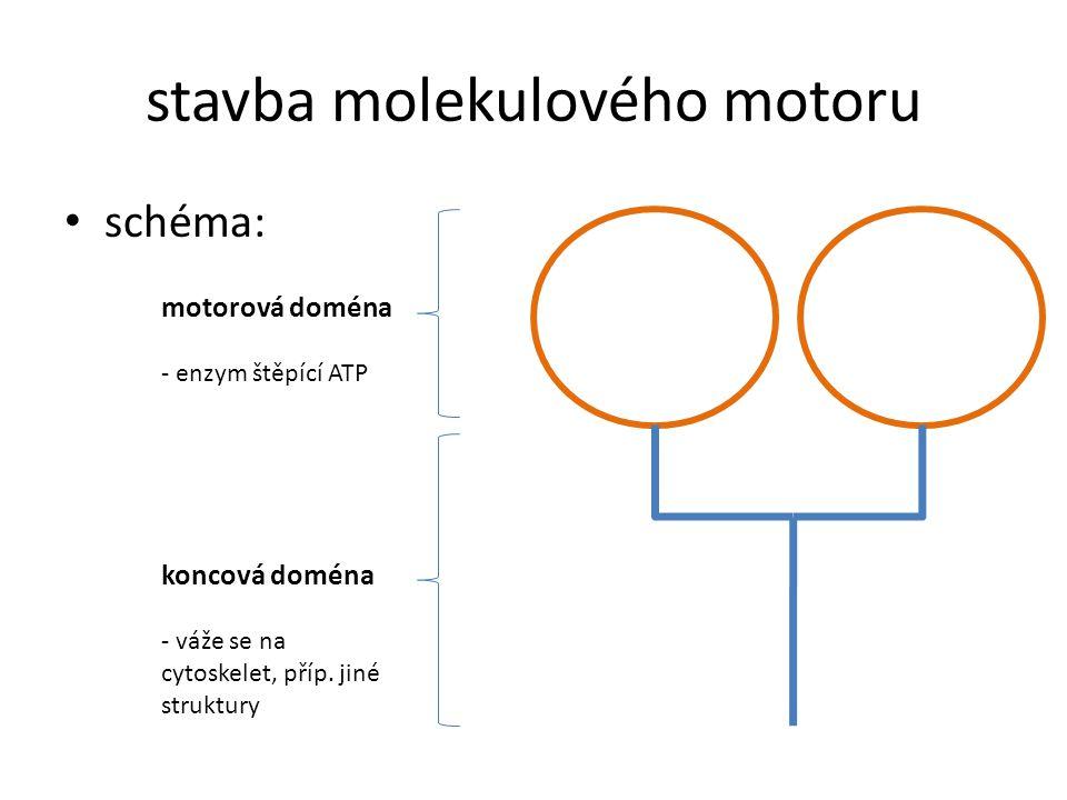 stavba molekulového motoru