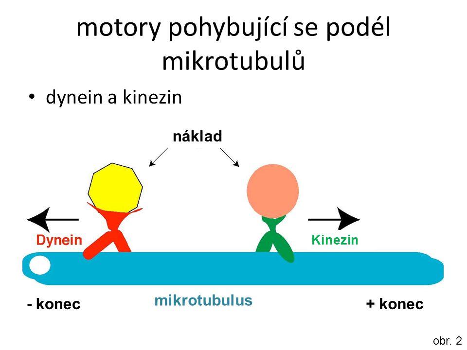 motory pohybující se podél mikrotubulů