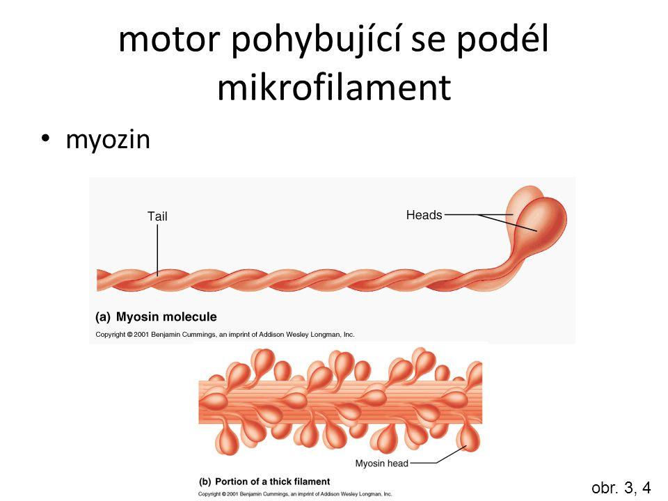 motor pohybující se podél mikrofilament