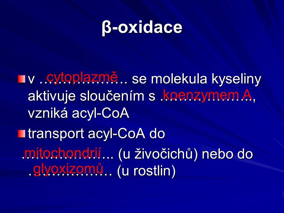 β-oxidace v ………………. se molekula kyseliny aktivuje sloučením s ……………….., vzniká acyl-CoA. transport acyl-CoA do.