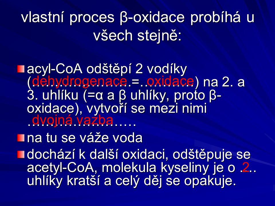 vlastní proces β-oxidace probíhá u všech stejně: