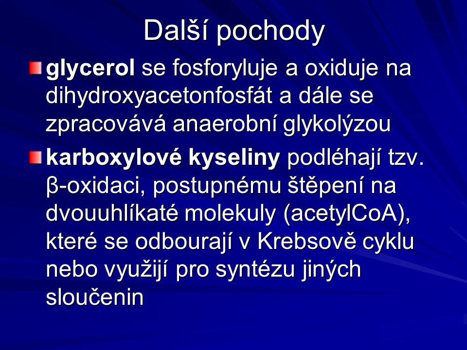 Další pochody glycerol se fosforyluje a oxiduje na dihydroxyacetonfosfát a dále se zpracovává anaerobní glykolýzou.