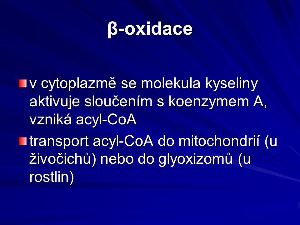 β-oxidace v cytoplazmě se molekula kyseliny aktivuje sloučením s koenzymem A, vzniká acyl-CoA.