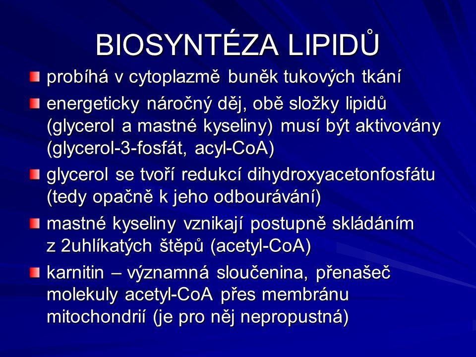 BIOSYNTÉZA LIPIDŮ probíhá v cytoplazmě buněk tukových tkání