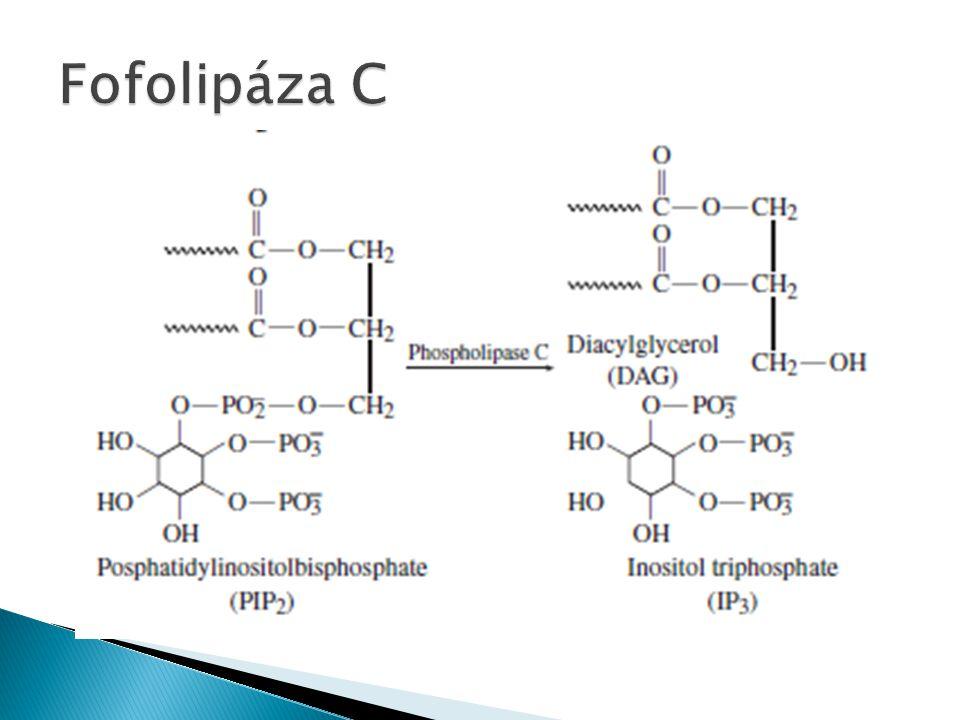 Fofolipáza C