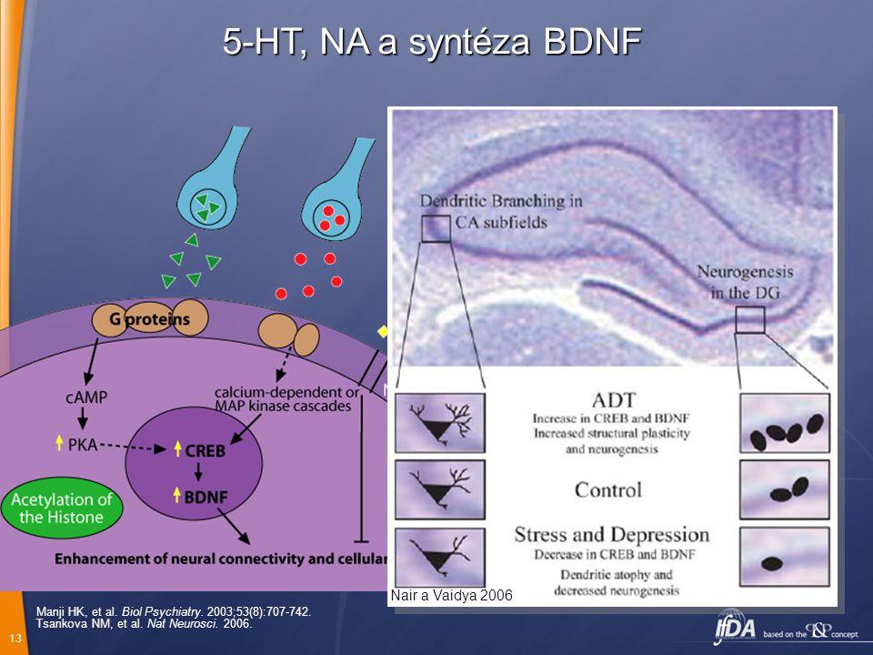 5-HT, NA a syntéza BDNF 5-HT NA Glutamát Glukokortikoid