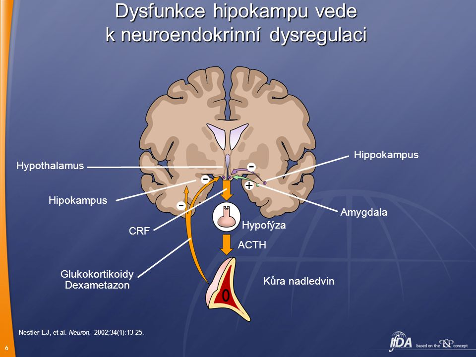 Dysfunkce hipokampu vede k neuroendokrinní dysregulaci