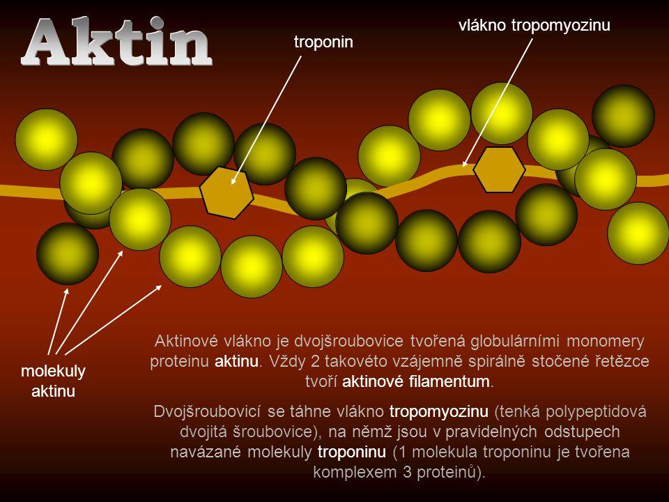 Aktin vlákno tropomyozinu troponin
