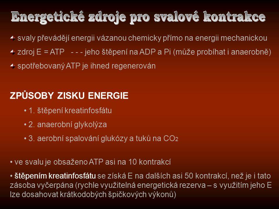 Energetické zdroje pro svalové kontrakce