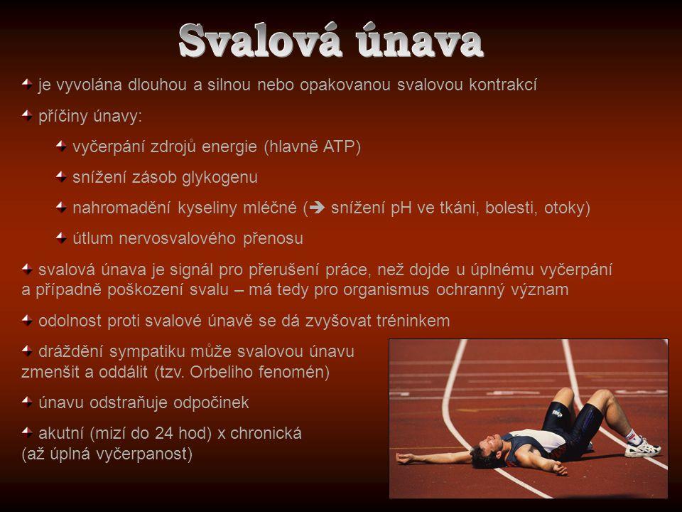 Svalová únava je vyvolána dlouhou a silnou nebo opakovanou svalovou kontrakcí. příčiny únavy: vyčerpání zdrojů energie (hlavně ATP)