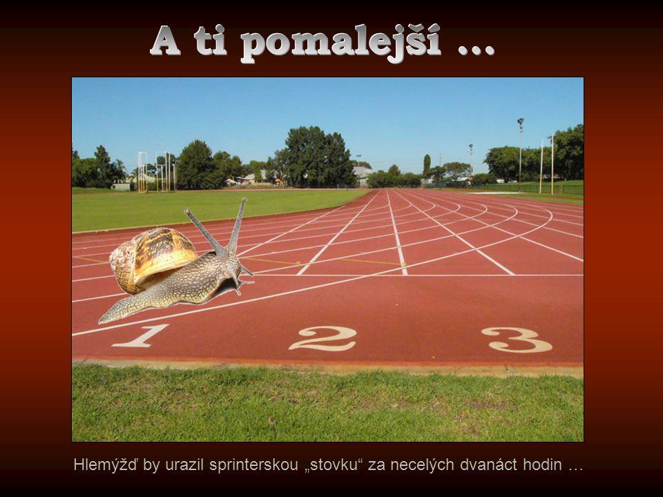 A ti pomalejší ... http://www.australiantransplantgames.com/images/venues/ern-clark-1.jpg.