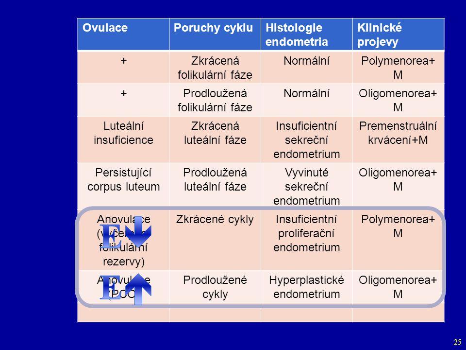 E E Ovulace Poruchy cyklu Histologie endometria Klinické projevy +