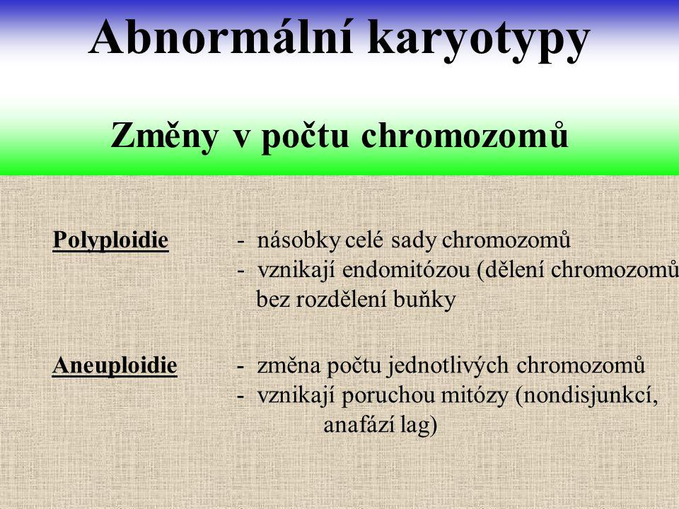 Změny v počtu chromozomů