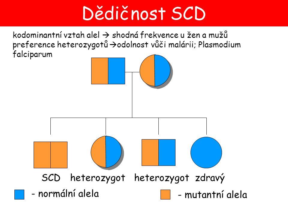Dědičnost SCD SCD heterozygot heterozygot zdravý - normální alela