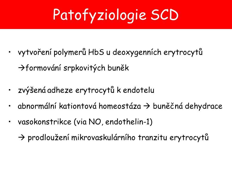 Patofyziologie SCD vytvoření polymerů HbS u deoxygenních erytrocytů