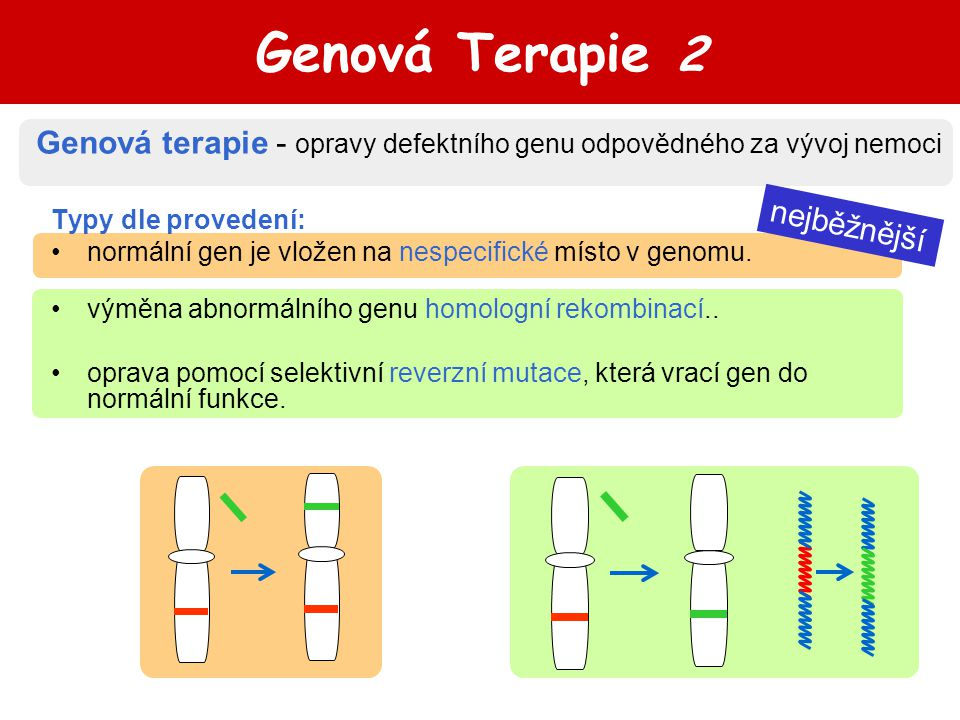 Genová Terapie 2 Genová terapie - opravy defektního genu odpovědného za vývoj nemoci. Typy dle provedení: