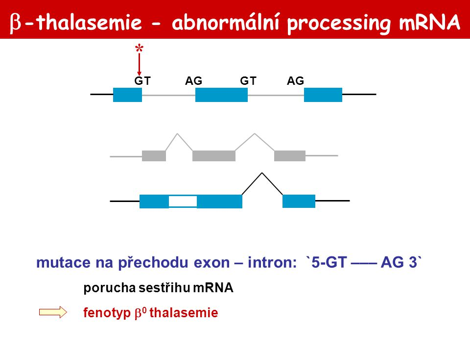 -thalasemie - abnormální processing mRNA
