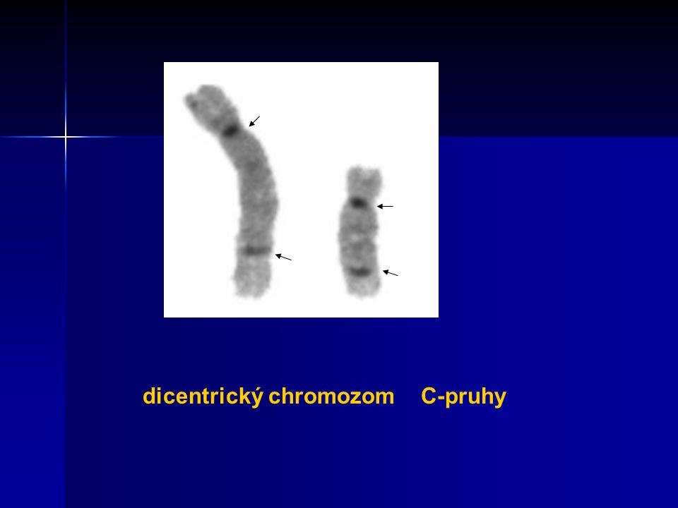 dicentrický chromozom C-pruhy
